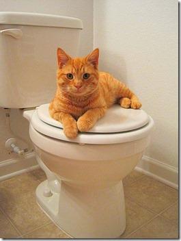 link toilet